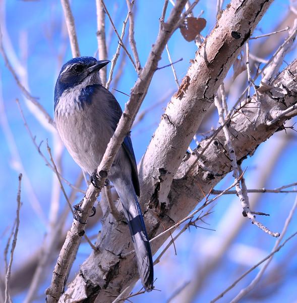 bird 1485
