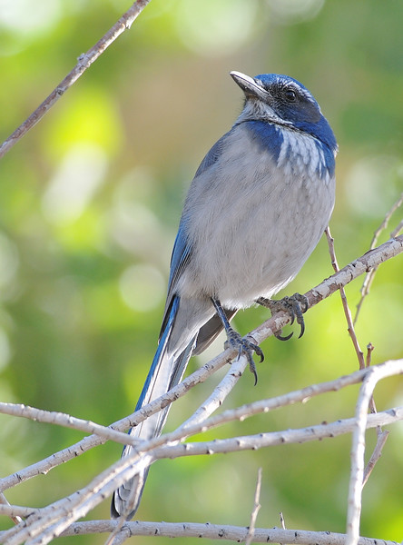 bird 883-a copy
