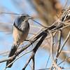bird 1502