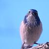 bird 1486