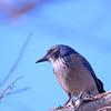 bird 1487