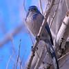 bird 1490