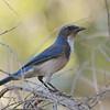 bird 872-a