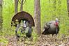 AWT-12061: Gobbler buddies