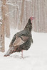 AWT-11076: Turkey in March snow storm