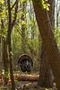 Deep in the woods gobbler