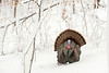 "AWT-13-146: Displaying Gobbler after 12"" snow storm"