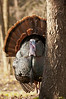 AWT-11232: Hiding behind tree