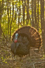 AWT-11277: Backlit Gobbler in full display