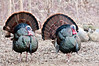 AWT-11117: Spring Gobblers