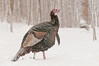 AWT-11078: March Snow storm Turkey