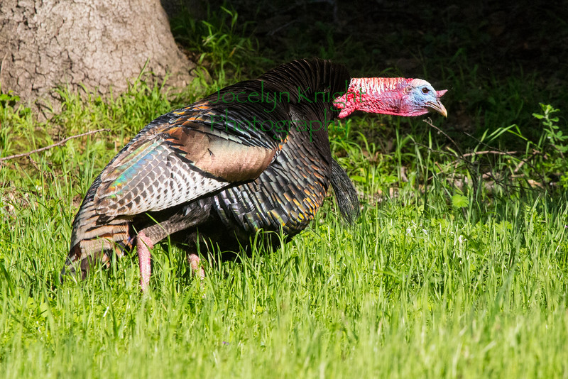 Turkey8544