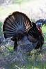 Turkey9565
