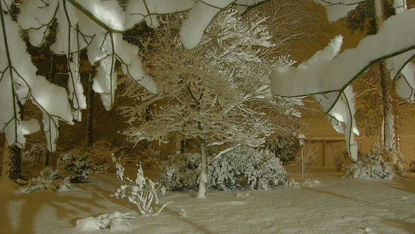 Late Friday night, seven inches of snow had fallen--very light and fluffy, hence not too much tree damage.