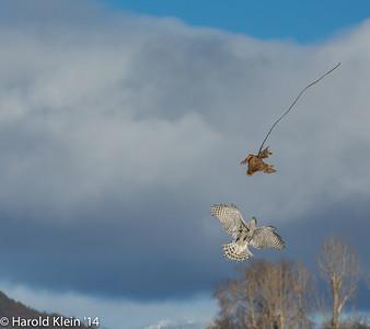 WinterWings Klamath Falls, OR Feb 2014-32