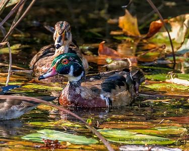 Beaver Marsh fall 2016 0147