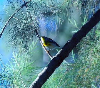 Bird & Butterfly Garden, Tijuana River Valley, San Diego, CA 10/23/2009