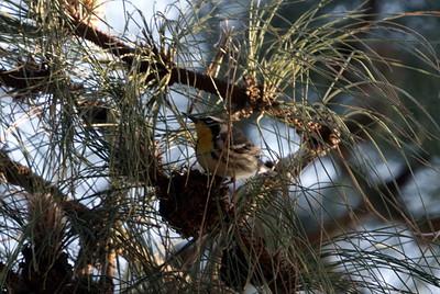 Tewinkle Park, Costa Mesa, Orange County 02/02/07