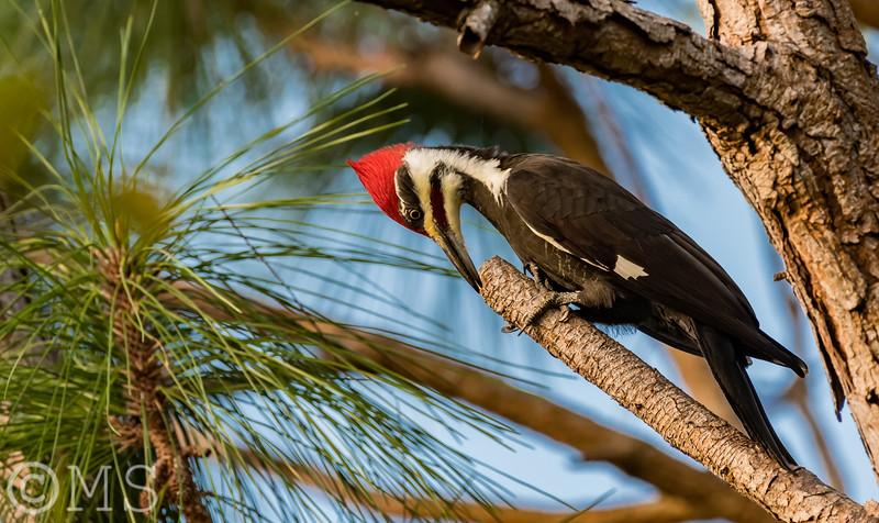 Woodpecker Image Gallery