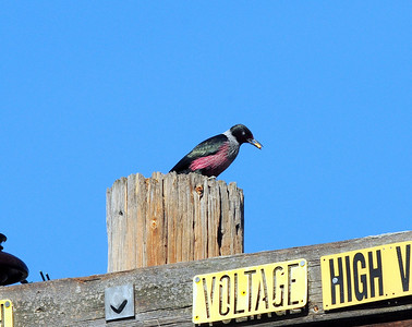 Lake Henshaw, San Diego County, CA 12/24/2009