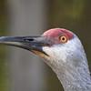 World Bird Sanctuary