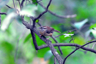 Frontera Audubon Sanctaury-Weslasco, TX 04/25/2009