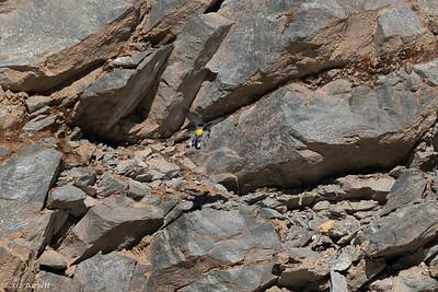 0U2A4780_Yellow-rumped Warbler