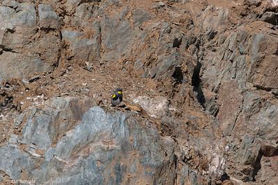 0U2A4786_Yellow-rumped warbler