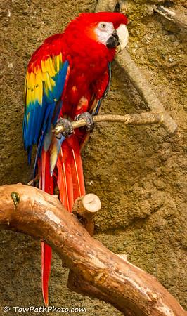 Experimental Shots - Zoo