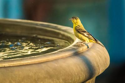 Fountain-6994