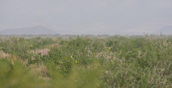 6.4.2019 Iran, Touran National Park