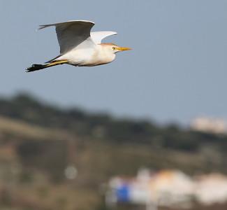 17.5.2010 Monte Gordo, Portugal