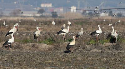 18.2.2012 Tagus Estuary, Portugal