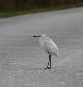 December 2009, Everglades National Park, Florida, USA