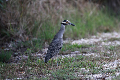 December 2009, Biscayne National Park, Florida, USA