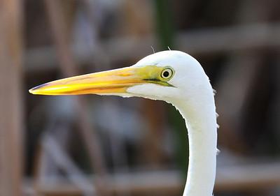 December 2009, Everglades National Park, Florida, USA