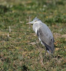 21.2.2012 Tagus Estuary, Portugal
