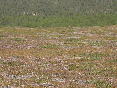 26.6.2003 Lapland, Finland