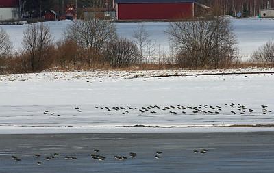 4.4.2012 Nurmijärvi, Finland