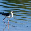 Unknown Galapagos bird.