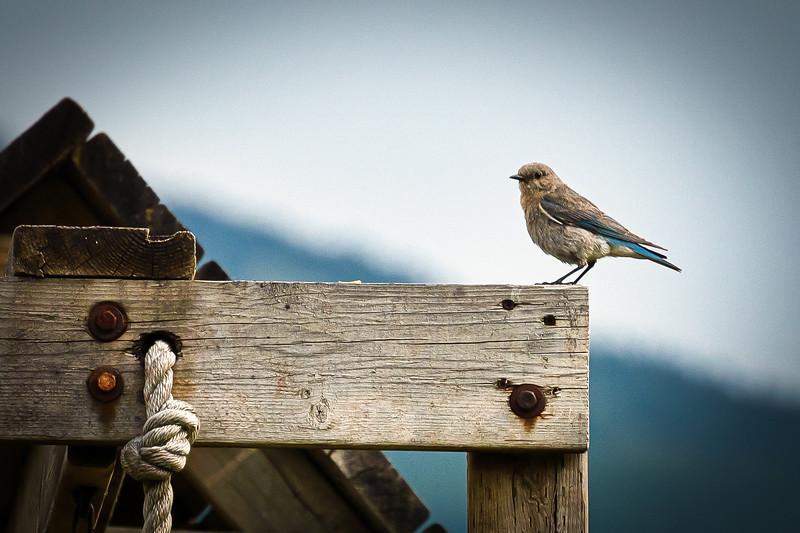 Bluebird on Board