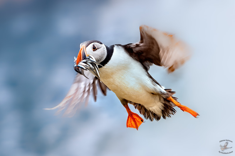 Fast Food Puffin