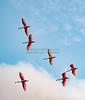 6 Spoonbills Flying_7188_1-20-20©DonnaLovelyPhotos com sm file-3