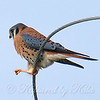 Kestrel Calisthenics Step 2