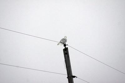 IMG_7371_snowy_post