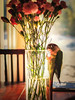 Conure and Roses