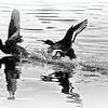 Водная баталия / A Water Battle