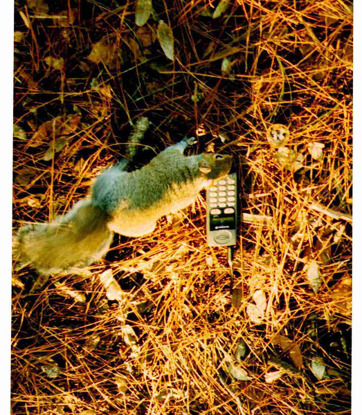 Squirrel with Cell Phone