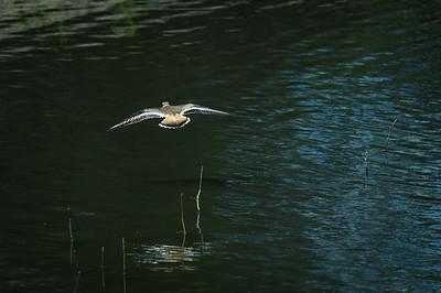Cruising over Water
