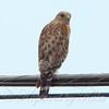 Smart Hawk